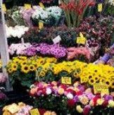 Des fleurs toute l'année, une idée à piquer ! Un bon cadeau chez un fleuriste, en voilà une bonne idée ! Fleurir sa maison toute l'année cela évite la morosité. Nos partenaires coups de cœur : La Boutique fleurie Aux Ambiances fleuries – Samba Fleurs Coups, Samba, Boutique, Plants, Year Round Flowers, Pique, Quirky Gifts, Gift Ideas, Tourism