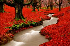 River running through Red Autumn Woods, Portugal.