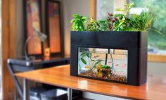Cultivate a Live Aquaponic Garden in Your Home http://futurism.com/videos/cultivate-a-live-aquaponic-garden-in-your-home/?utm_campaign=coschedule&utm_source=pinterest&utm_medium=Futurism&utm_content=Cultivate%20a%20Live%20Aquaponic%20Garden%20in%20Your%20Home