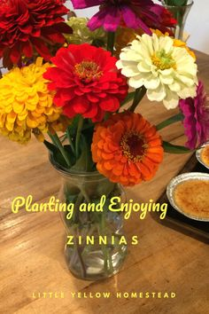Zinnias would not have been one of my favorite flowers prior to this year, but this year I am learning to really appreciate and enjoy them. I had never grown Zinnias before, but … Gardening For Beginners, Gardening Tips, Amazing Gardens, Beautiful Gardens, Arizona Gardening, Zinnias, Diy Garden Decor, Front Yard Landscaping, Organic Gardening
