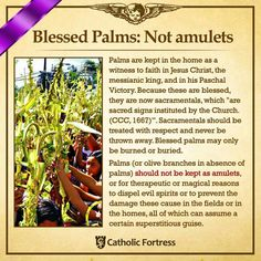 Blessed Palms