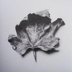 Leaf by Melinda Alice Kierre, graphite pencil, 2008 Pencil Shading, Pencil Art, Pencil Drawings, Art Drawings, Botanical Drawings, Botanical Illustration, Botanical Art, Leaf Drawing, Nature Drawing