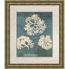 Found it at Wayfair - Coral I Framed Graphic Art