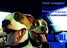 Tail waggin, Face lickin, People lovin, All American Pit Bull Terrier     WWW.THEPITBULLCREW.COM