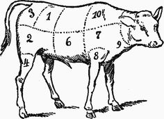 Veal Meat, Diagram of Calf