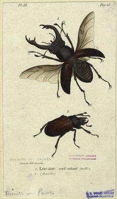 Insects: The taste of Petrol and Porcelain | Interior design, Vintage Sets and Unique Pieces www.petrolandporcelain.com Lucanus Cervus: Stag beetle.