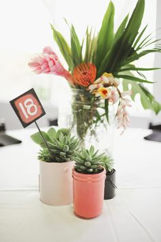 Chickens and Hens as office plants. Will be happening at TB very soon!