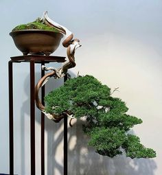 Promoting and Expanding the Bonsai Universe Bonsai Tree Price, Buy Bonsai Tree, Japanese Bonsai Tree, Bonsai Trees For Sale, Bonsai Tree Care, Bonsai Tree Types, Tree Sale, Indoor Bonsai Tree, Mini Bonsai