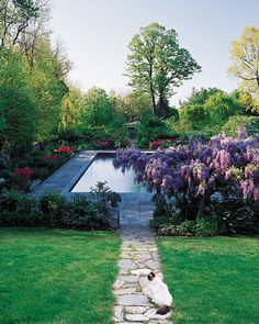Martha Stewart's Turkey Hill home... A walk down a narrow path ends at a rectangular pool. Clearly cut paths elsewhere on the property allow visitors to walk among perennial beds without going astray. The colors seen in late spring -- a heavy dose of pinks and purples -- arrive only after a very yellow showing earlier in the season.