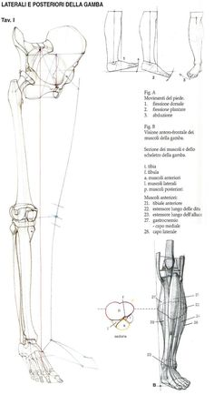 New How To Draw Human Anatomy Studio Ghibli 18 Ideas Leg Anatomy, Anatomy Bones, Anatomy Study, Anatomy Art, Anatomy Reference, Figure Drawing Reference, Hand Reference, Pose Reference, Human Anatomy For Artists
