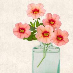 He encontrado este interesante anuncio de Etsy en https://www.etsy.com/es/listing/77710045/botanical-art-print-flower-photograph
