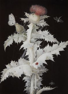 A Thistle Branch with a Butterfly, Dragonfly, Ladybird and Spider, 1777, Barbara Regina Diezsch. (1706 - 1783) - Gouache on paper