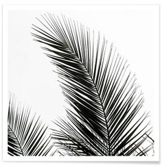 Palm Leaves 1 - Mareike Böhmer - Affiche premium