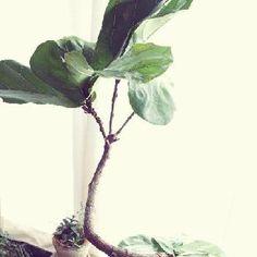 自慢の観葉植物フォトコンテスト|[GreenSnap]観葉植物や花の名前、ガーデニング雑貨のおすすめが見つかる!