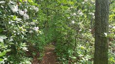 Wenonah Lake Loop Trail.