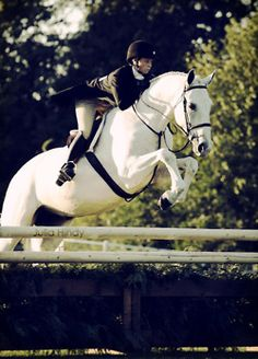 A beautiful combination of this young rider and her steady yet athletic white gelding. If I saw him walk in the ring, as a judge, I would be pulling for him because I know he takes care of his rider.