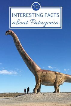 10 interesting facts about Patagonia, Argentina