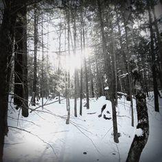 A Bleak Winter by wagn18.deviantart.com on @deviantART