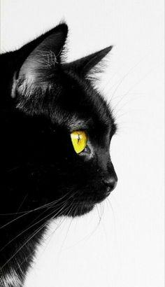 Crazy Cat Lady, Crazy Cats, Cat Spirit Animal, Cool Cats, I Love Cats, Black Cat Aesthetic, Black Cat Art, Watercolor Cat, Cat Wallpaper