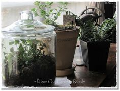 Using a cookie jar type container and adding small succulent plants to create a beautiful terrarium