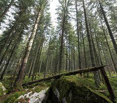 Das gefällt uns!  Südwest: Baden-Württemberg: Mehr Wald schonen, Natur- und Artenschutz fördern - badische-zeitung.de