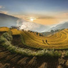 """""""Sunset on terraced rice fields. Photography by © (Le Hong Ha).This photos was taken in Mu Cang…"""""""