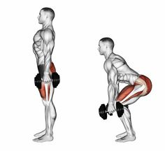 Squats with dumbbells. illustration Squats with dumbbells. Fitness Gym, Sport Fitness, Muscle Fitness, Physical Fitness, Muscle Food, Fitness Motivation, Lifting Motivation, Health Fitness, Fitness Memes