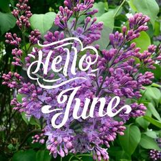 Hello June  june hello june june quotes hello june quotes welcome june