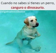 When you don't know if you have a dog a kanguroo or a dinosaur Funny Animal Memes, Stupid Funny Memes, Funny Relatable Memes, Funny Dogs, Funny Animals, Cute Animals, Funny Dog Pictures, Funny Images, Funny Spanish Memes