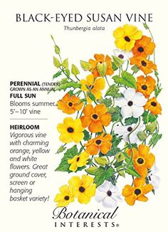 Vigorous vine with spunky orange, yellow, and white flowers. Ground cover, screen, or hanging basket. House Plants For Sale, Plants For Sale Online, Garden Seeds, Garden Plants, Indoor Plants, Planting Bulbs, Planting Flowers, Black Eyed Susan Vine, House Plant Delivery
