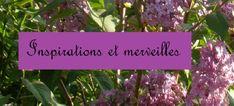 Blog, Inspiration, Herbs, Plants, Biblical Inspiration, Blogging, Herb, Plant, Inspirational