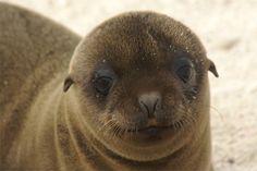 Foto's van Galapagos eilanden | Columbus Travel – Ontdek de wereld buiten de gebaande paden