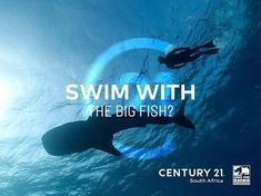 Ready to swim with the big fish?  Give us a call and join the Century 21 team of relentless franchisees. A Worldwide Leader In Real Estate in partnership with Save the Rhino International  Buy | Sell | Rent www.century21.co.za www.savetherhino.org/ #C21 #Leaders #buy #sell #rent #ENERGACITY #support #worldwideleader #givingback #SAVETHERHINO #franchise @savetherhinointernational Save The Rhino, Big Fish, Relentless, Property For Sale, South Africa, Join, Buy And Sell, Real Estate, Swimming