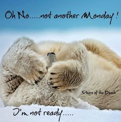 Not another Monday quote via Peace of the Beach on Facebook at www.facebook.com/MariannesPeaceoftheBeach