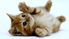 http://s3.amazonaws.com/rapgenius/cats-animals-kittens-background.jpg