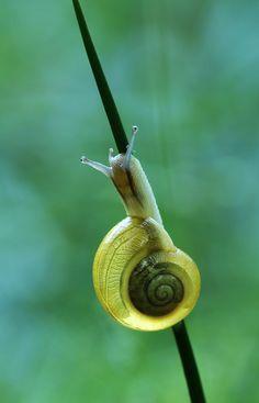 Snail, Cassilda Dias