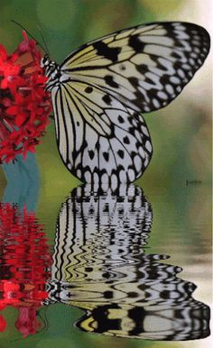 Animated Insects, Animated Graphics, Animated Landscape, Animated Butterflies, Beautiful Flowers, Insects, Bugs, Keefers gif by Keefers_ | Photobucket