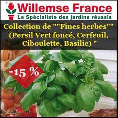 """#missbonreduction; """"Promos: 15% de remise sur la Collection de """"""""Fines herbes"""""""" (Persil Vert foncé, Cerfeuil, Ciboulette, Basilic) """". http://www.miss-bon-reduction.fr//details-bon-reduction-Willemse-i200-c1834378.html"""