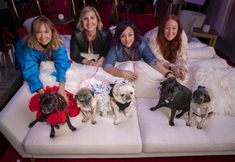 The goodest story of the week: Meet the pups of the Beverly Hills Dog Show The Beverly, Beverly Hills, Encinitas Beach, K9 Officer, Pugs, Pug Dogs, Old Golden Retriever, Blue Shark, The Kennel Club