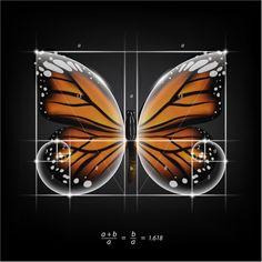 Fibonacci Golden Ratio, Fibonacci Spiral, Fibonacci Sequence In Nature, Golden Ratio In Nature, Yellena James, Divine Proportion, Mandala, Sacred Architecture, Spirituality Books