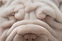 Just too cute.  Other than babies the only other time we find deep wrinkles cute!