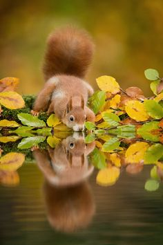 Cute Critters Frolicking Around Forests of Holland - My Modern Metropolis