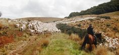 New Zealand Ranch: Beaumont High Country Experience