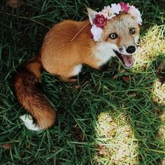 animals, cute, flower crown, fox