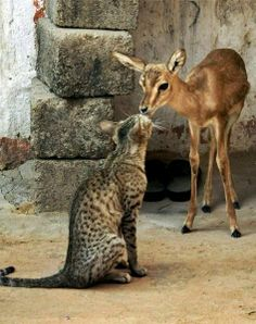 Cat and Bambi