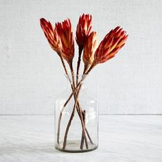 "Natural Protea | west elm. Set of 3 stems. (I would buy two sets-these are so cool. What if we used these against the charcoal wall at the end of the hall?) 5.5""w x 2""d x 16""h. $12 each set"