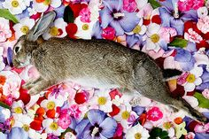 Russian photographer Maria Ionova-Gribina's unique but morbid Natura Morta project lets us look into the saddest part of nature's cycle – death. In these beautiful photographs, the animals look like they're sleeping peacefully, with birds dreaming of flight and rabbits of running.