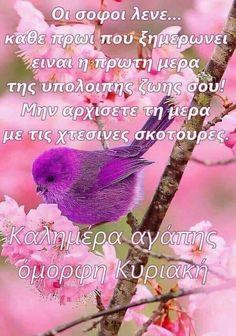 Saturday Sunday, Greek Quotes, Good Morning Quotes, Good Night, Wish, Bebe, Nighty Night, Good Night Wishes