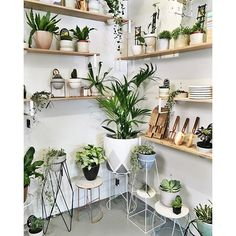 Ivy Muse Shop | OK we know it's finally cool (hurrah!) and there's some serious shopping still to get done. We've extended our hours and are open TODAY 10 - 6. Come say hi and spread the gift of green #ivymuse #prahran #plantsmakepeoplehappy #indoorplants