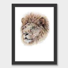 Lion Art Print by Olivia Bezett NZ Art Prints, Art Framing Design Prints, Posters & NZ Design Gifts | endemicworld